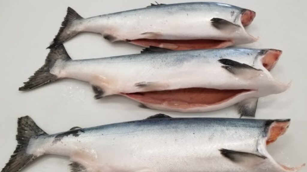 Get some pink in ya with our BC wild pink salmon